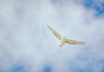 Roh Kudus, Sang Pembeda