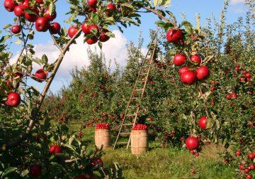 Be Fruitful!